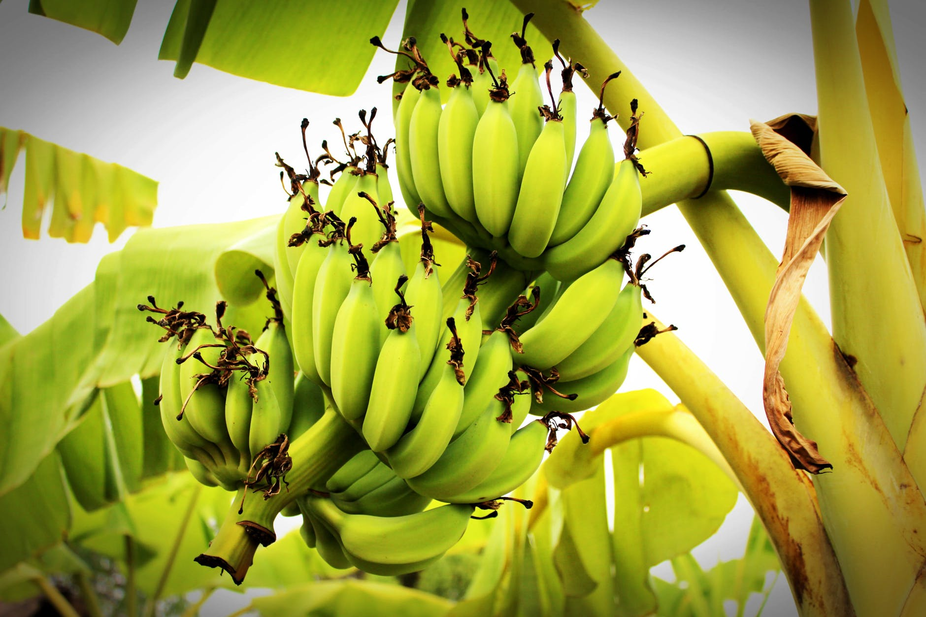 фрукты бананы деревья фото концепция