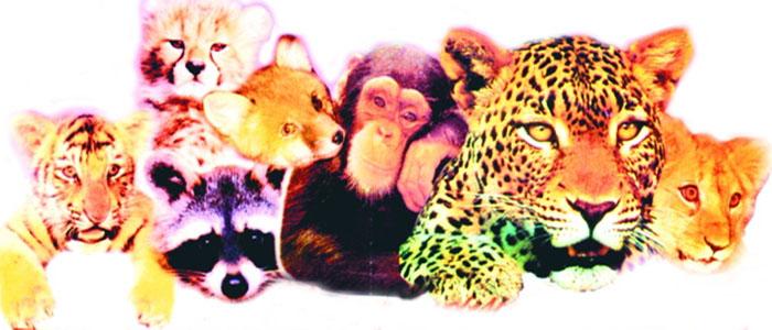 примеры диких зверей, которые были домашними