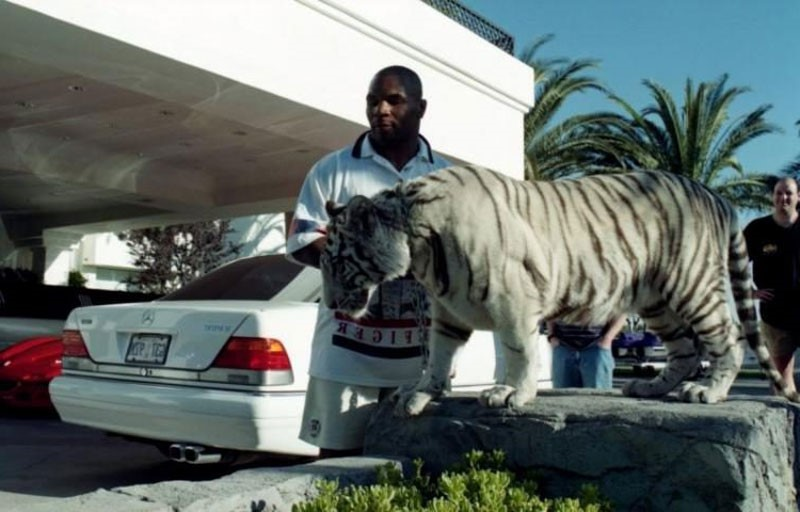 боксёр Майк Тайсон и его тигр