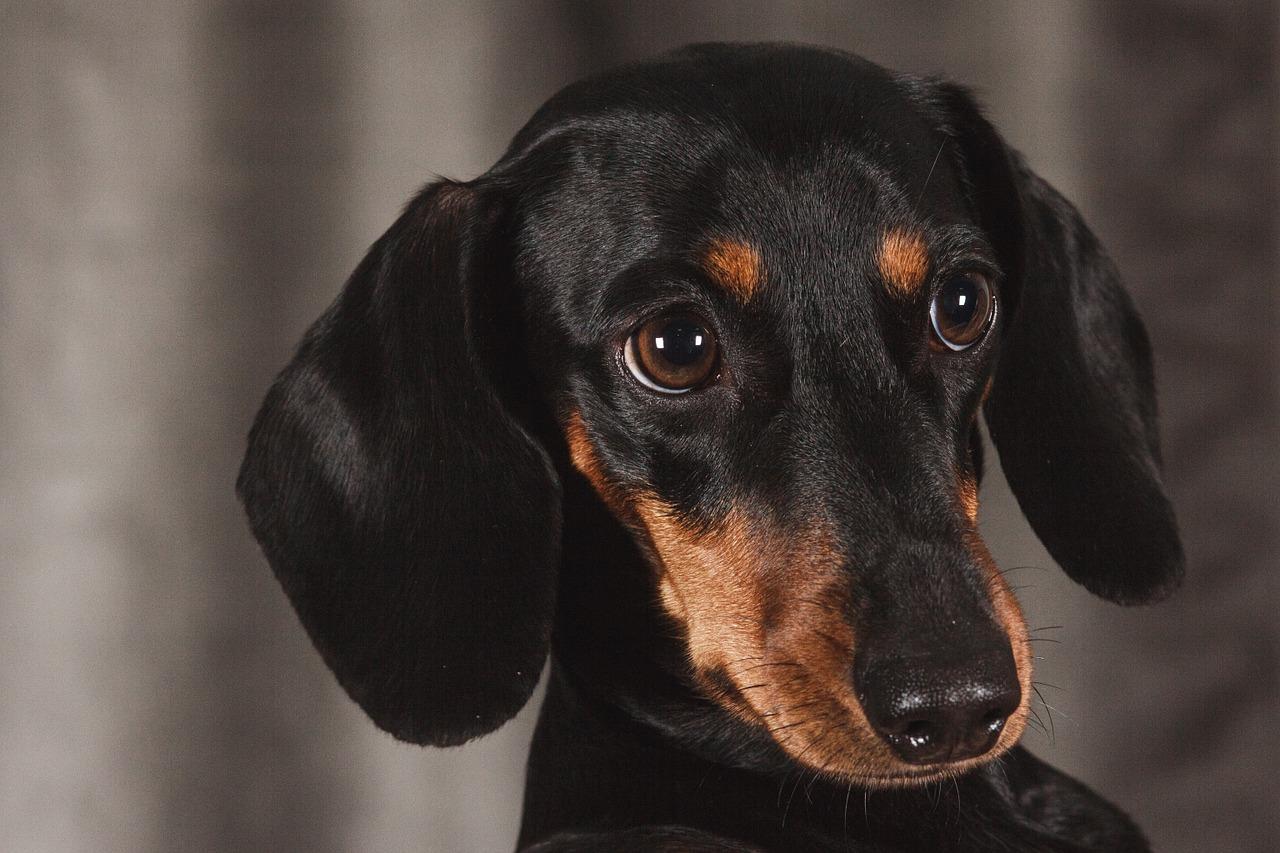 1597309639-dog-1232449-1280.jpeg