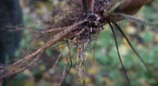 Корневая система растений