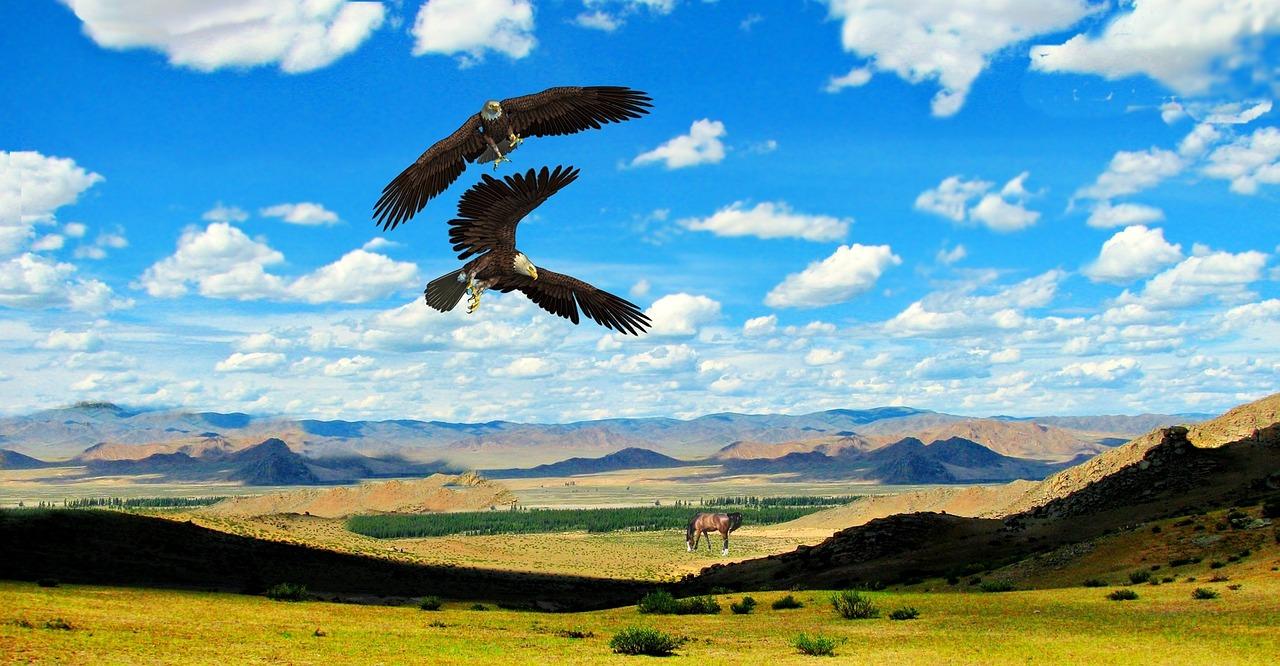 1606041838-eagles-1032952-1280.jpeg
