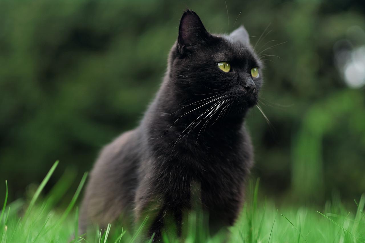 1606398259-cat-4541889-1280.jpeg